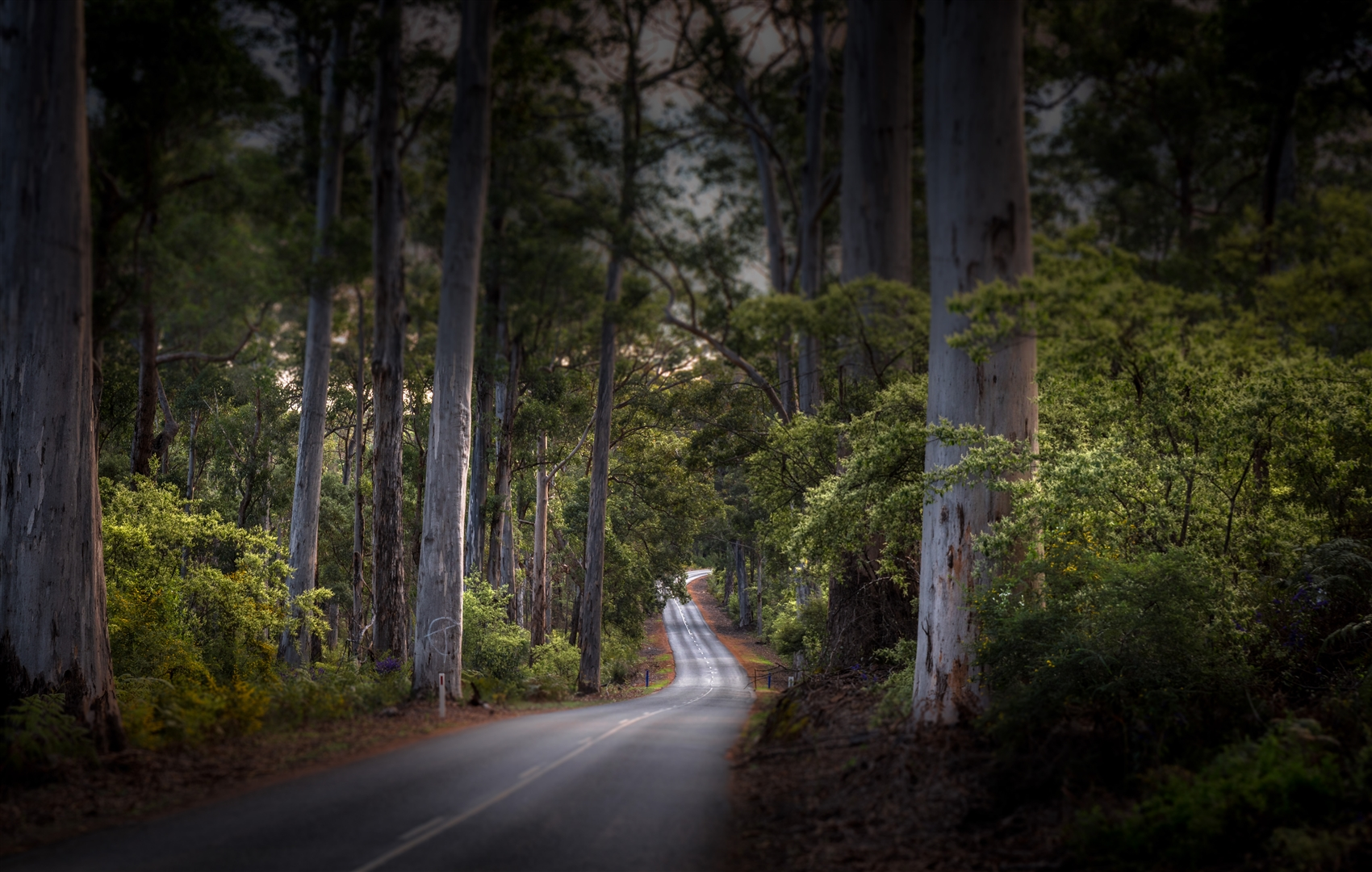 Stunning Forest Drives